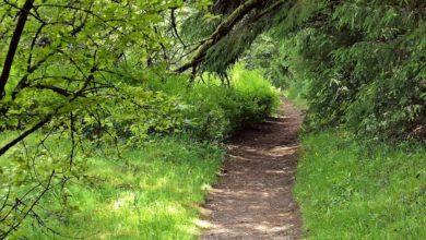 Wanderweg Harz - Hexenstieg
